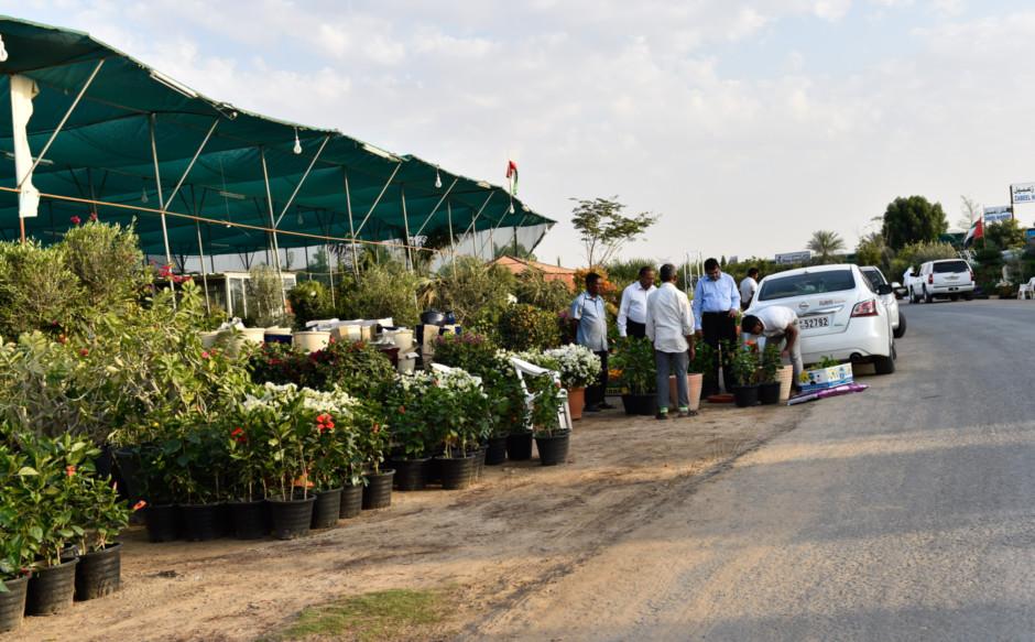 Pers At Warsan Plant Souq Image Credit Virendra Saklani Gulf News