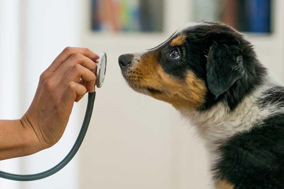 Image result for dog detects cancer